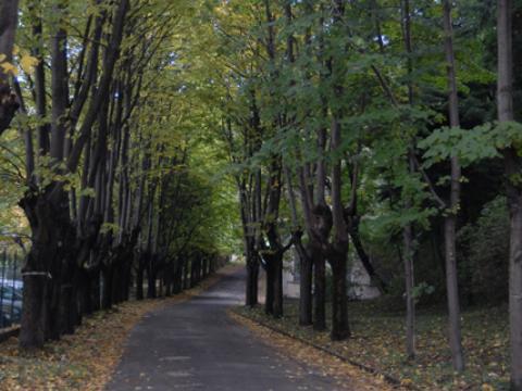 Parco del San Martino: viale dei tigli